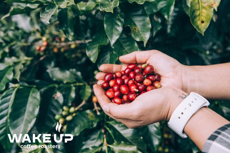 Коммерция и спешалити кофе